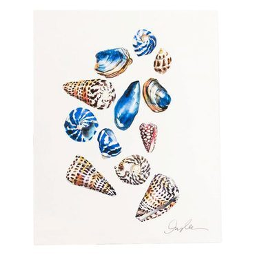 Seashells Print, Unframed